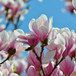 Que faire dans son jardin, lors de l'arrivée du printemps ?